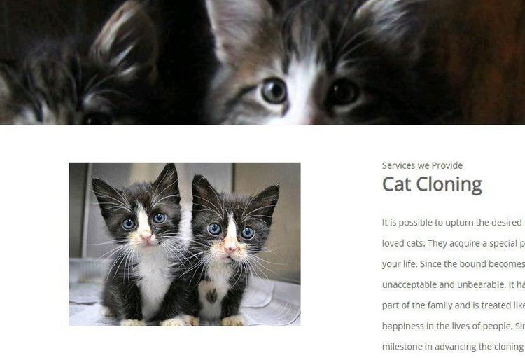 Компания будет клонировать не только котят, но и других животных