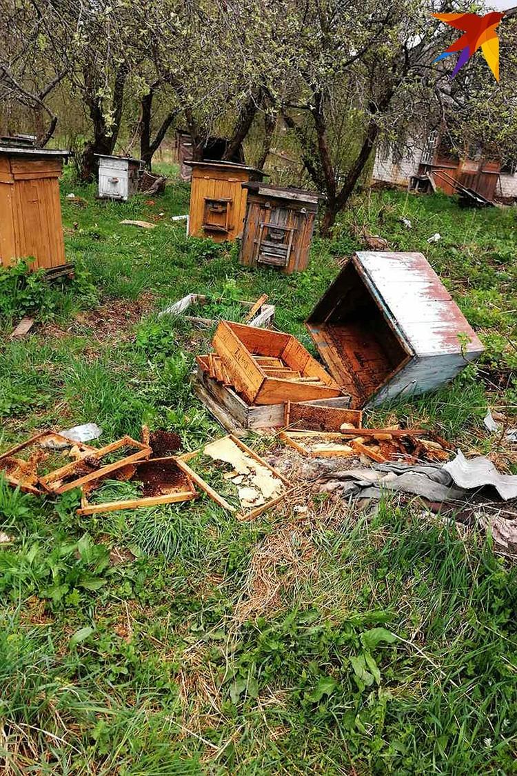 Пчеловод подсчитал: медведи только на его пасеке нанесли ущерб в 2,5 тысячи рублей. Фото: Виталий МАКОВСКИЙ.