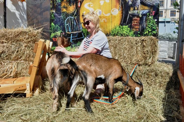 А еще на ярмарке можно с козами сфотографироваться