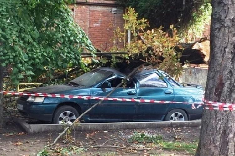Дерево упало на машину.
