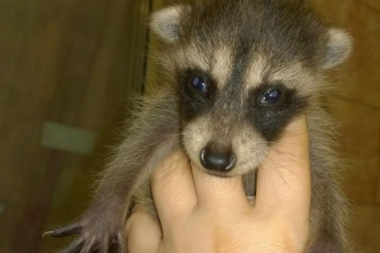 А таким Мошку принесли в зоогалерею и познакомили с песиком. Фото: иркутская зоогалерея.