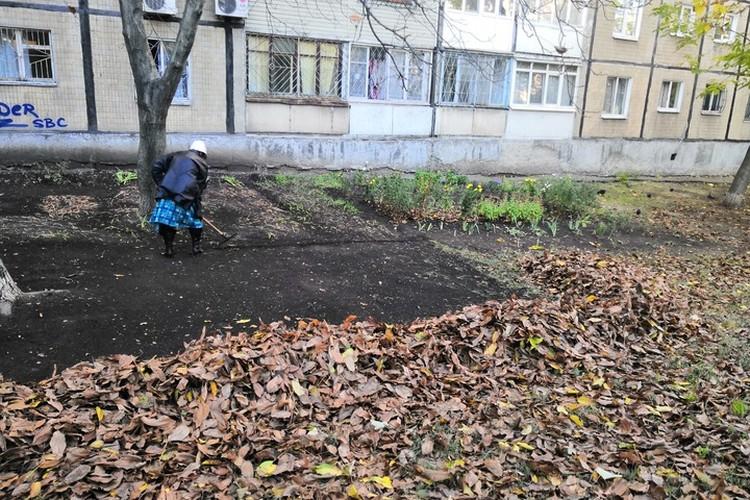 В-третьих, хороший хозяин знает, что листва защитит от морозов, если они ударят на пустую землю.
