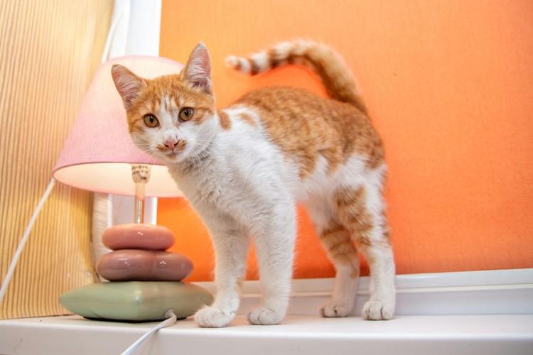 Зайку уже прозвали двойником кота Крымского мост. Фото: vk.com/mjgkieserdca