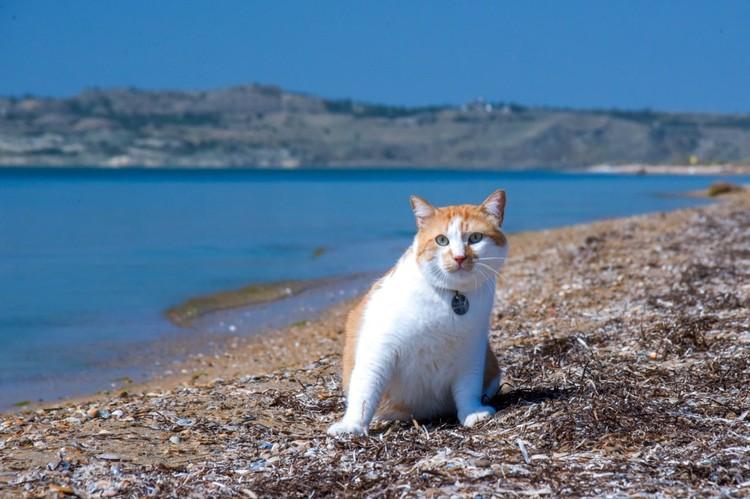 Кот Мостик. Фото: vk.com/cat.the.most