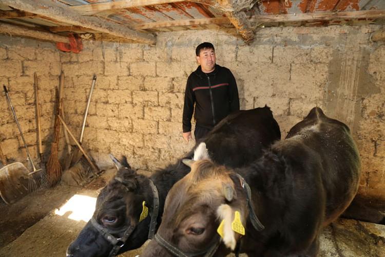 Бахтияр Макеев сотрудничает с семьей Гайфулиных уже несколько лет. Караколец занимается откормом бычков. «Такого гранулированного корма в Караколе больше нет, - говорит фермер. - Все необходимое есть в рационе».