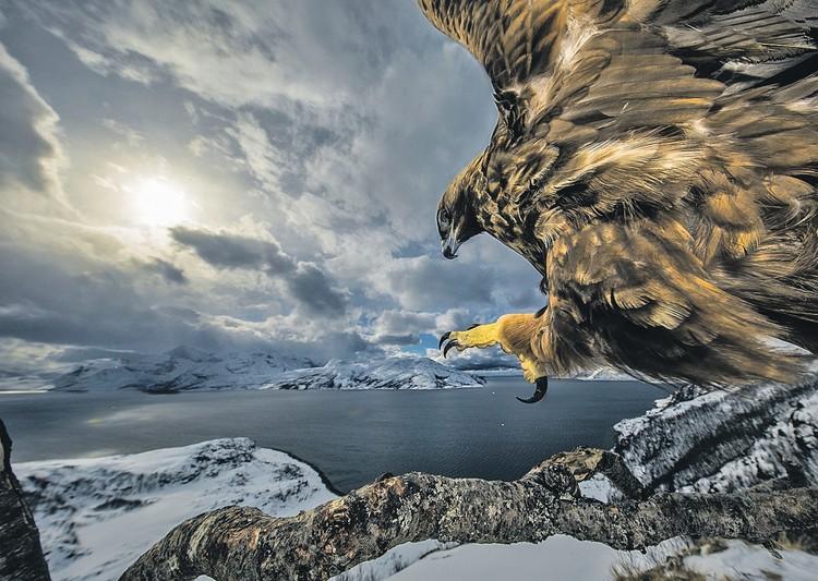«Земля орлов» - победитель в номинации «Птицы». Автор - Аудун Рикардсен (Норвегия). Фото: Audun Rikardsen