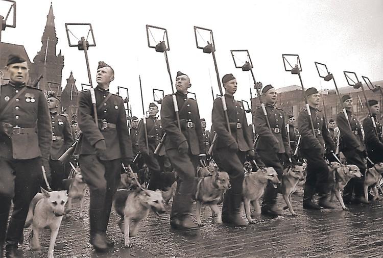 На Парад Победы, кроме всех войск, вышли и 68 тысяч воевавших собак-саперов. Еще на параде были все танкисты, пехота, казаки и летчики. Но Сталин решил не делать день Победы всенародным праздником. И лишь в 1965 году он стал традицией.
