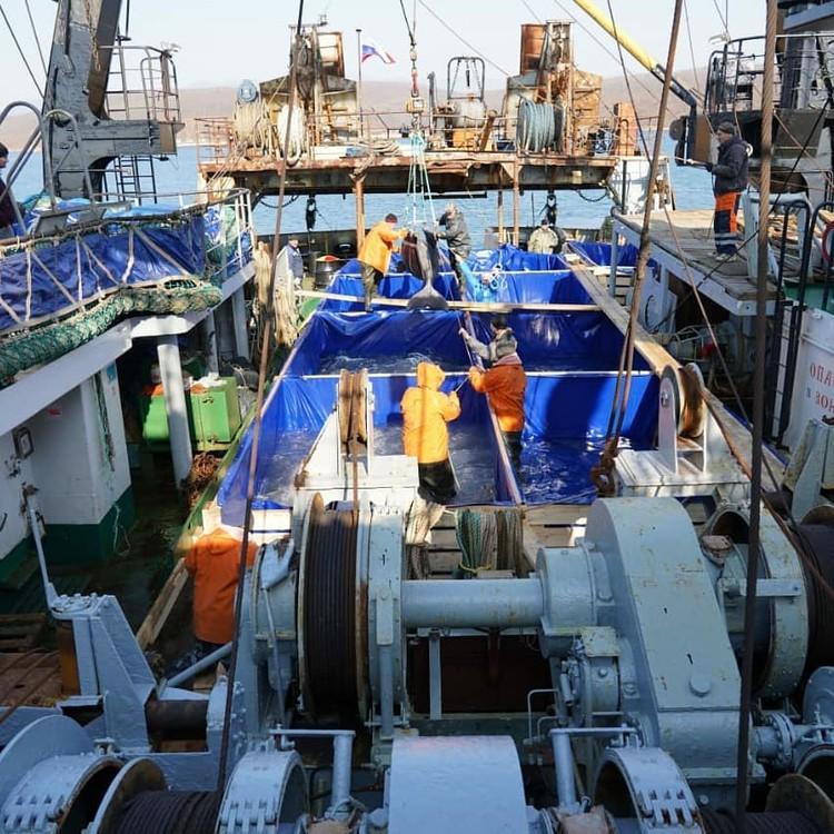 За выпуском узников «китовой тюрьмы» будут следить экологические активисты