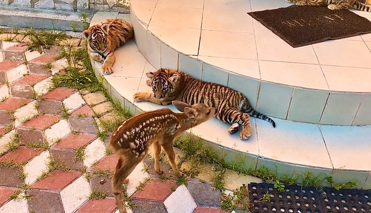 Олежка поладил с хищниками. Фото: Даниэлла Вознесенская