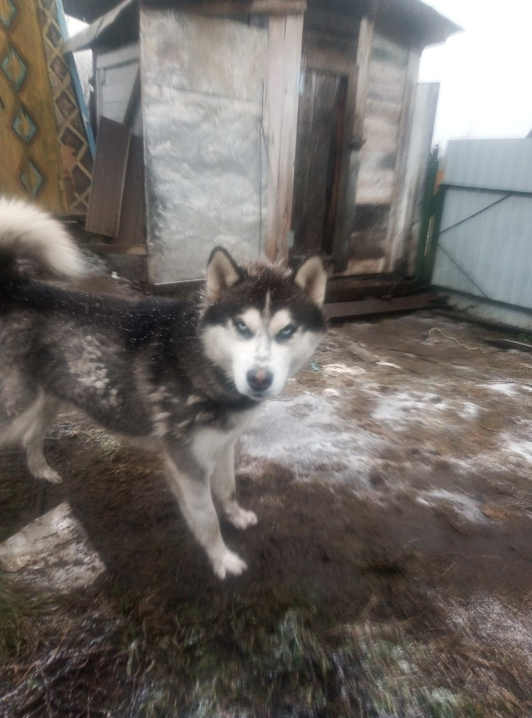 Семье собак из Курагино грозила гибель. Фото: Дорога домой. Помощь животным.