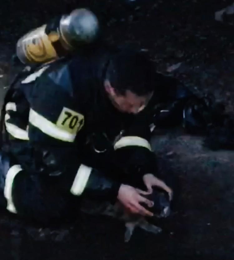 Реанимация: к морде животного прикладывают маску дыхательного аппарата. Фото: кадр с видео ГУ МЧС по Тверской области