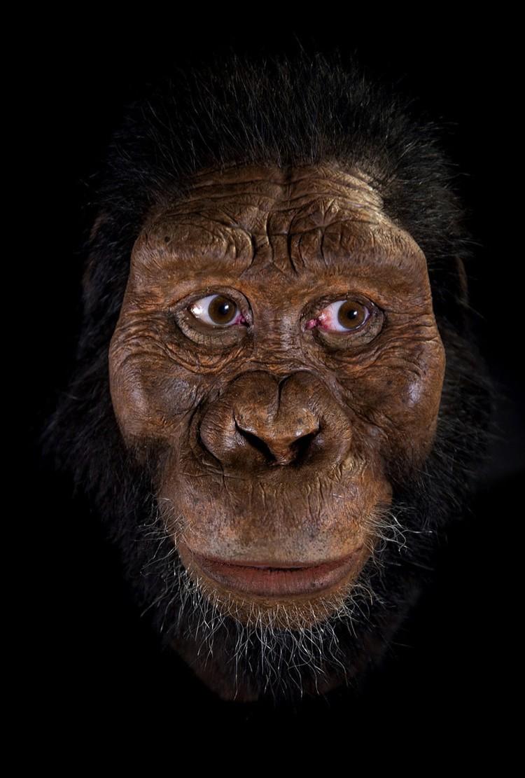 Так выглядел еще один наш предок - возможно, более умный, чем обезьяна.