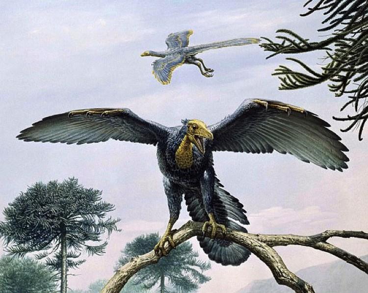 """Прежде первым пернатым считался археоптерикс, но голубь оказался """"первее""""."""