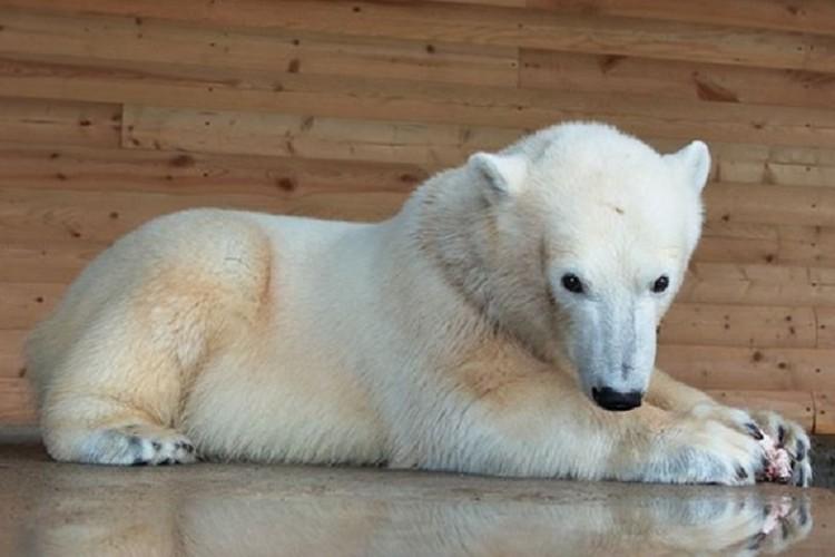Вот такой маленькой Хаарчаана появилась в Ленинградском зоопарке в 2017 году / Фото: Ленинградский зоопарк