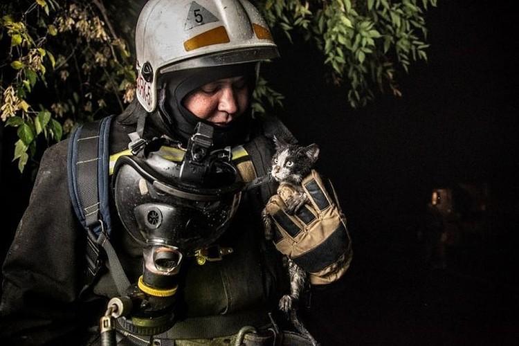 Тот самый момент, когда Гидранта спасли из огня. Фото: Виктор Боровских/ГУ МЧС России по Новосибирской области.