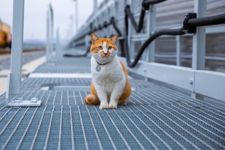 Кот выглядит великолепно. Фото: кот Мостик/VK