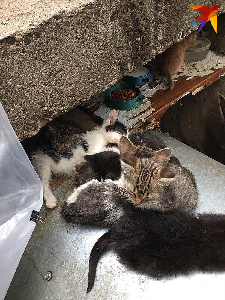 """Фото: фонд помощи животным """"Мягкие сердца"""""""