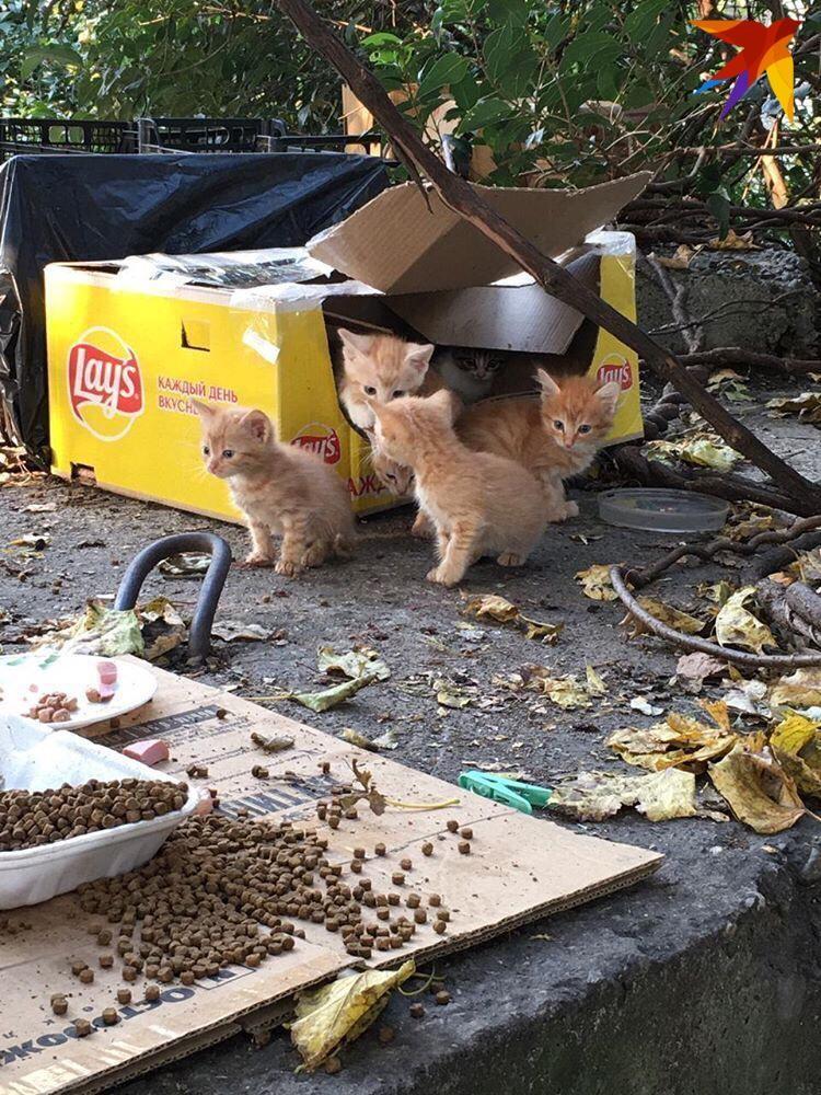 """Котят тут очень много. Фото: фонд помощи животным """"Мягкие сердца"""""""
