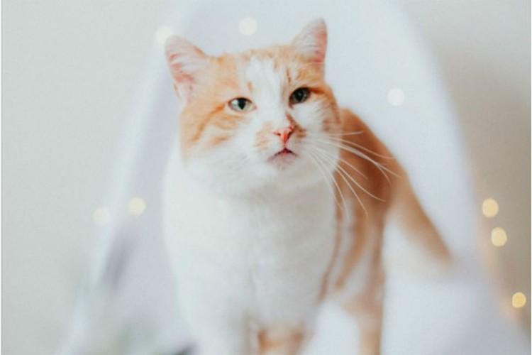 """Барс даже в фотосессиях успел поучаствовать, пока жил в приюте. Фото: частный приют для кошек """"Томасина"""" в соцсетях."""