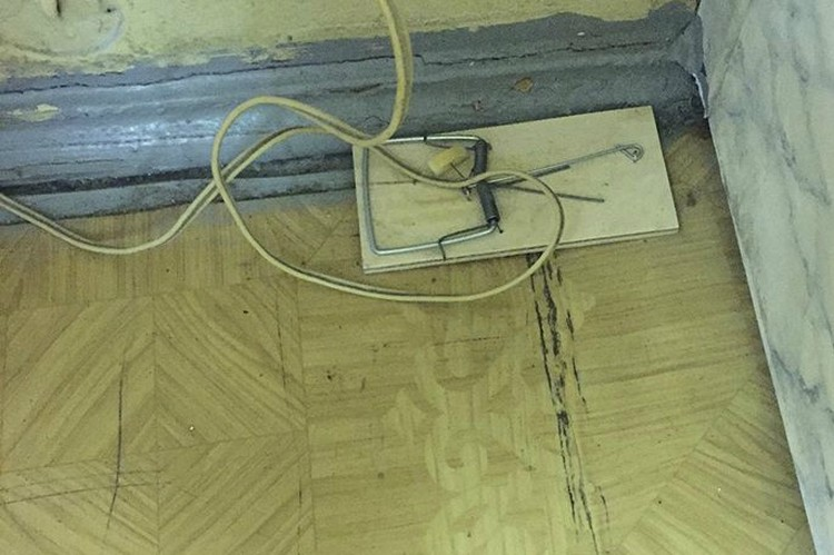 Там, где лежат пациенты, мышей, по словам руководства, нет. Но есть мышеловки. Фото: Предоставлено Екатериной Надольской