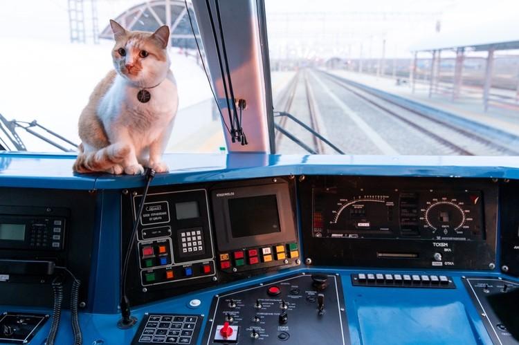Отчитался. Президент мостом доволен! Теперь возьмусь за эксплуатацию. Фото: кот Моста/VK
