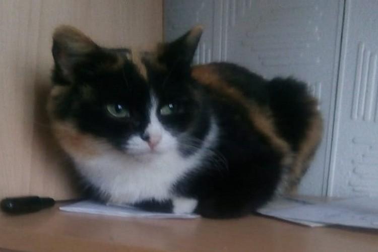 Кошкам грозит улица. Фото: Счастливый хвост. Помощь кошкам. Пермь