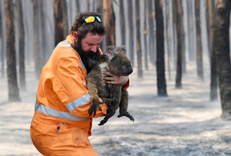 Пожарный спасает коалу в национальном парке Австралии.