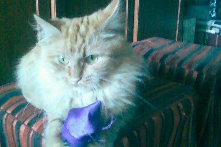 "Кошка держала хозяйку в ""заложника"" Фото: скрин страницы хозяина кошки"