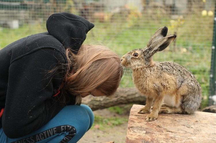 Если вы встретили маленького зайчонка, то не нужно брать его в руки