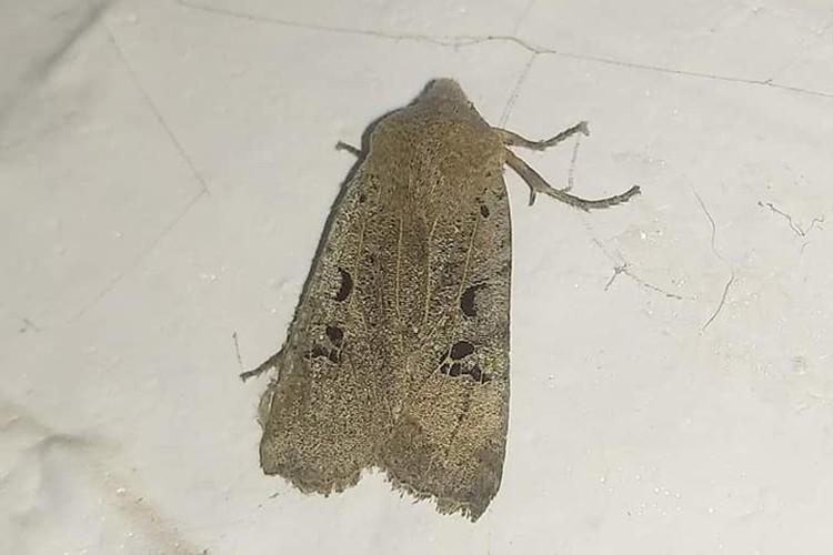 И среди насекомых встречаются экстремалы, которые бодро вскакивает едва потеплеет. Фото: Евгения Мартынова