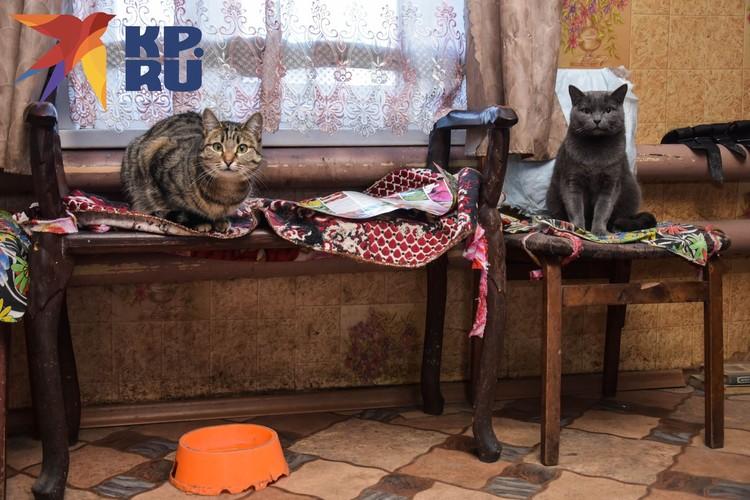 Кошки упитанные, все стерилизованы.