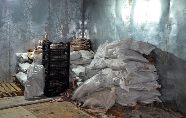 В цеху было рыбы на 1,3 миллиона рублей. Фото ГУ МВД по Астраханской области.
