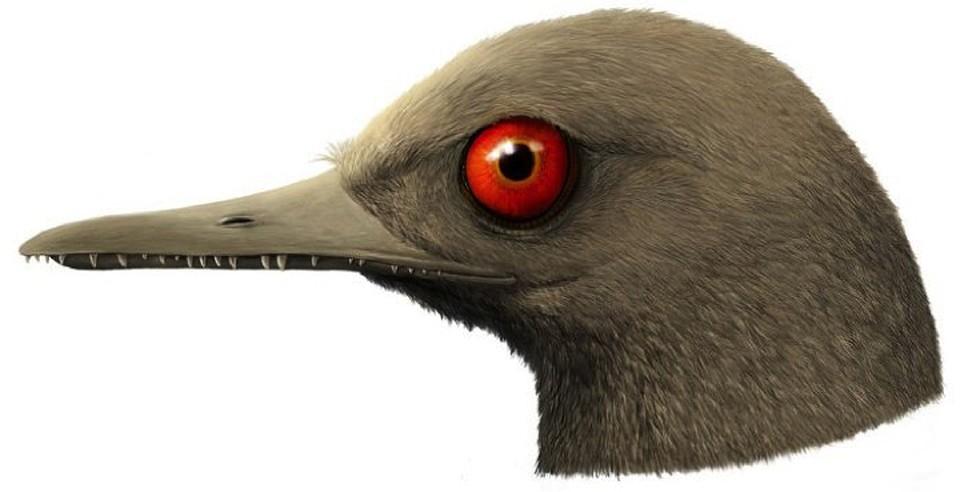 Так в представлении палеонтологов могла выглядеть голова обладателя длинного клюва, обнаруженного в янтаре.