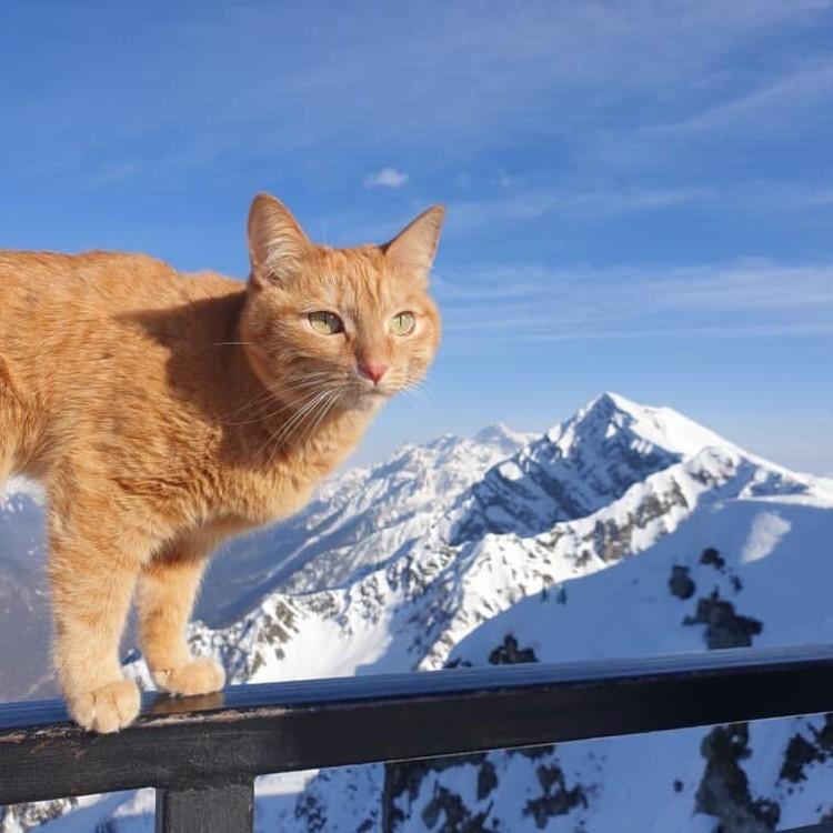 Валери в горах Красной Поляны. Фото: instagram.com/valery_cat