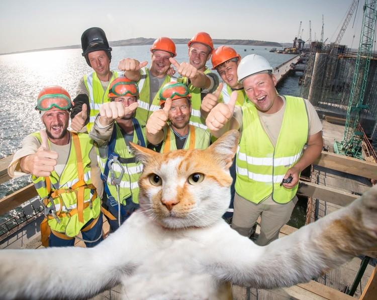 Кот сделал селфи с мостостроителями. Фото: Кот Моста/VK