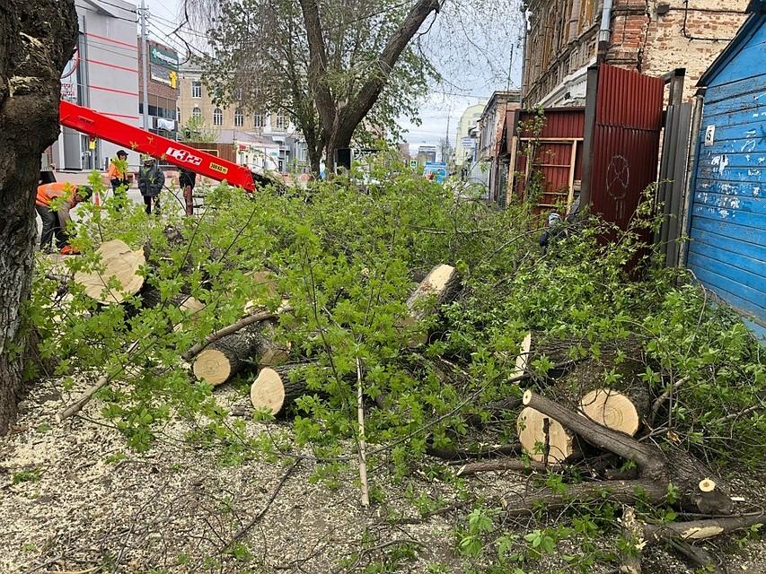 Мэрия сообщает о вырубке старых деревьях, горожане говорят обратное
