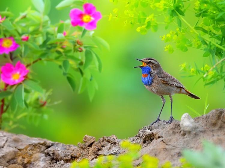 «Летние луговые песни». Фото Владилена Зубарева («Дикие животные»)