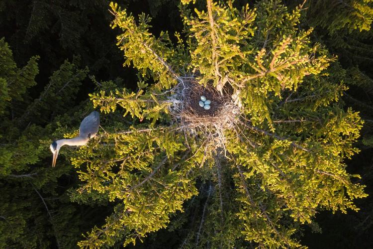 «Цапля и гнездо». Фото Дмитрия Вилюнова («Россия с высоты птичьего полета»)