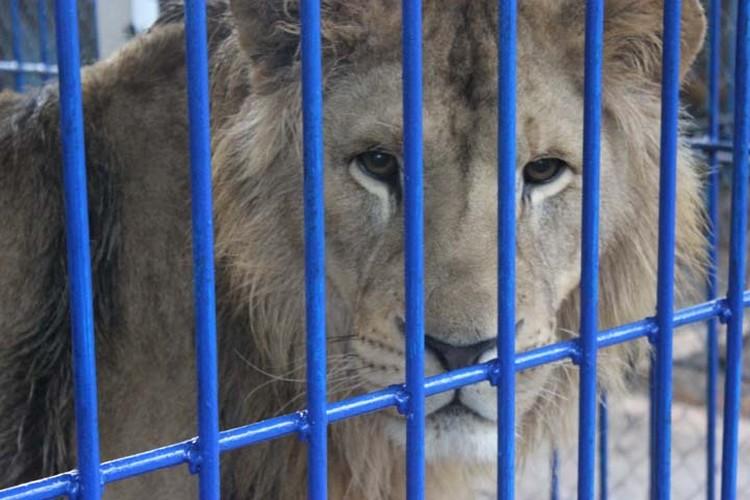 Как живет самый большой зоопарк в Республике