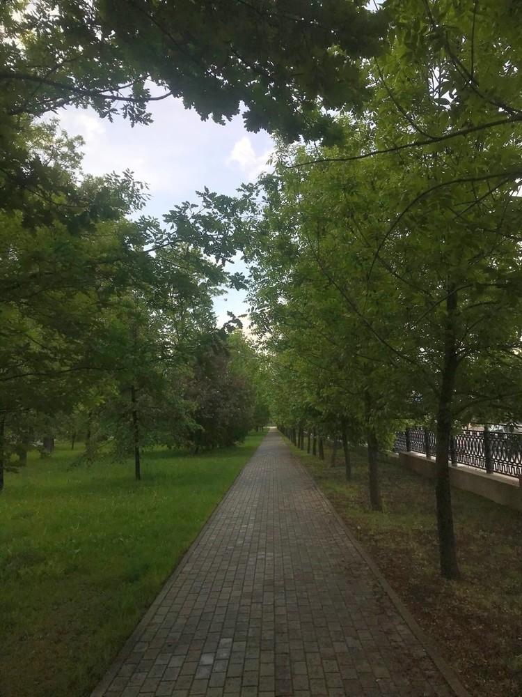 Деревья могут стать продолжением этой аллеи