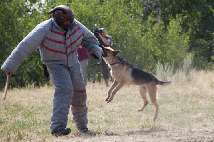 От служебной собаки далеко не убежишь. Фото: ГУФСИН России по Челябинской области