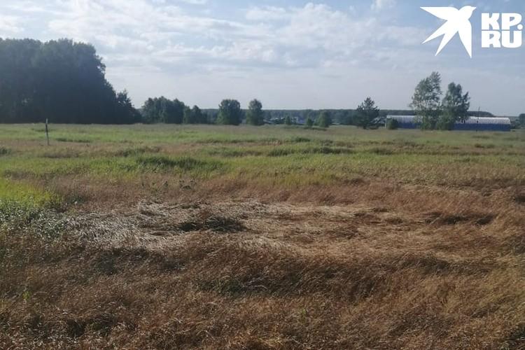 Вот так выглядят поля после обработки химией. Фото: Предоставлено героем публикации