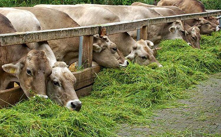 Фермеры берут ссуды на развитие сельского хозяйства и животноводства.