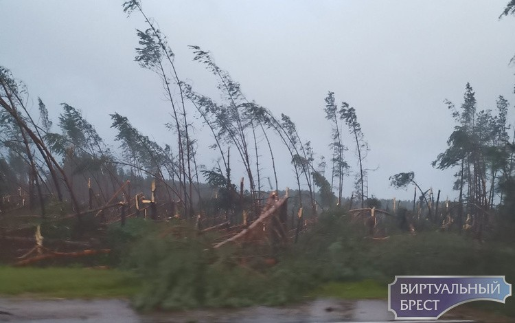 Ветер ломал деревья, как спички. Фото: Виртуальный Брест