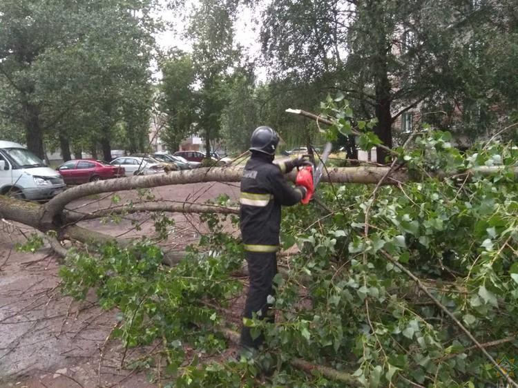 Спасатели помогали расчищать дороги от сломанных деревьев. Фото: МЧС