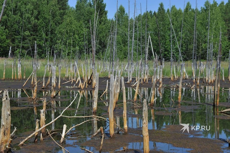 Так выглядит болото рядом с прудом, в котором отстаивается кислая вода.