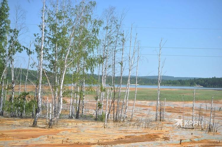 Хоть пруд и окружает лес, местные жители говорят, что деревья тут живут не полную свою жизнь.