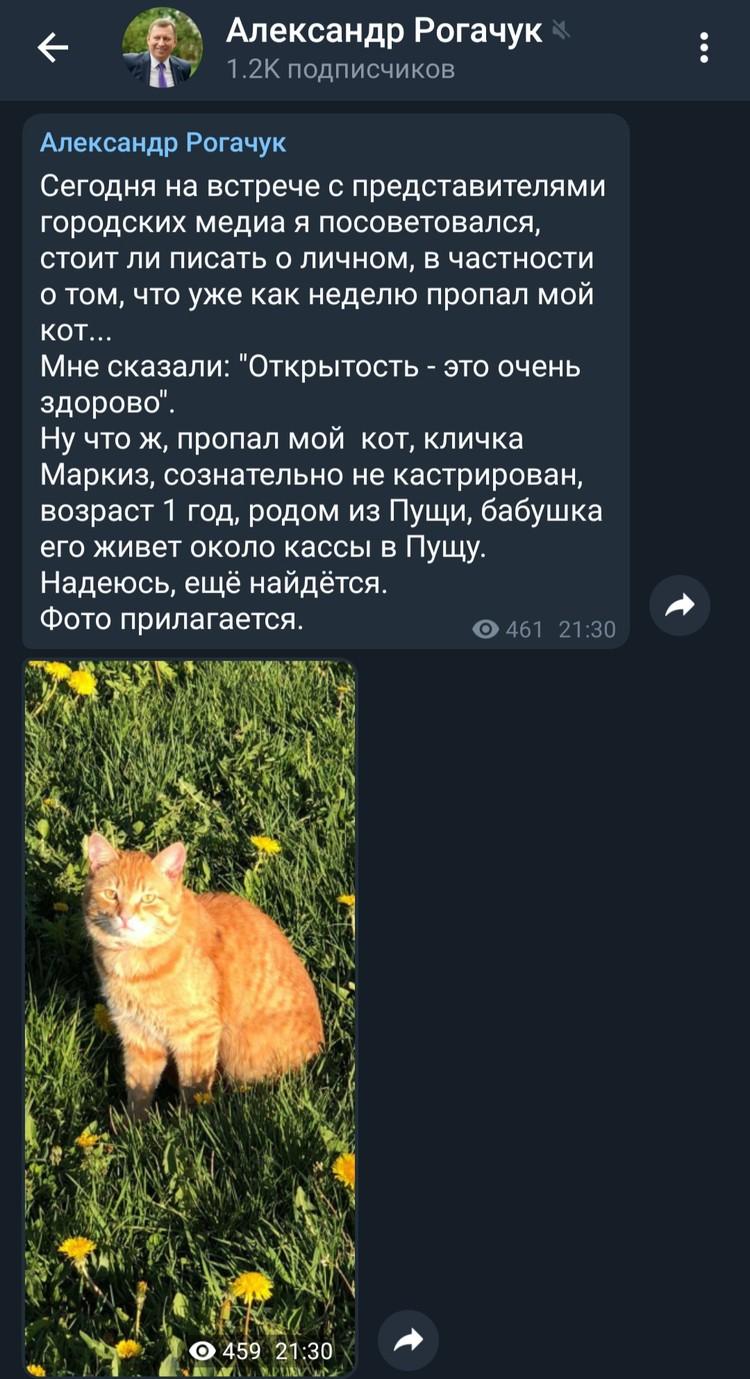 А вот и пост про кота.