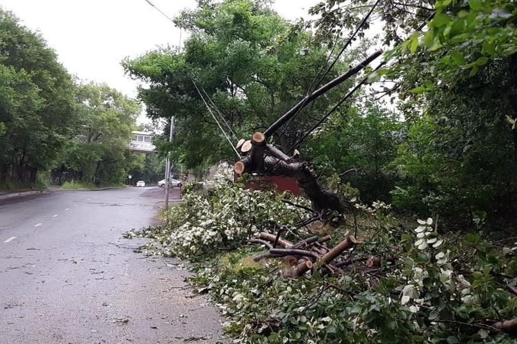 Упавшие деревья спровоцировали коммунальные аварии в Приморье. Фото: vpes.ru