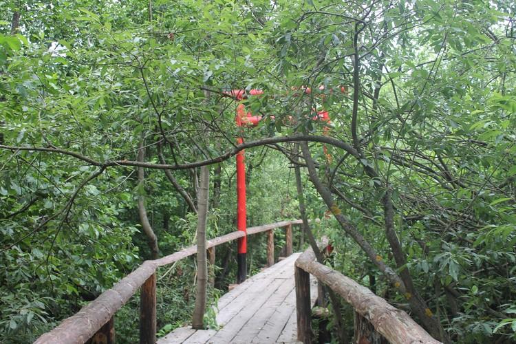 Мост обрамляют деревья, которые растут сквозь него.